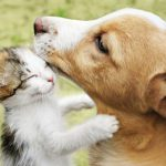 The kitten hugs the puppy HD Background Image