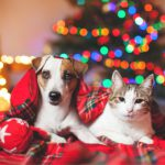 Cat and dog under a christmas tree HD Image Background